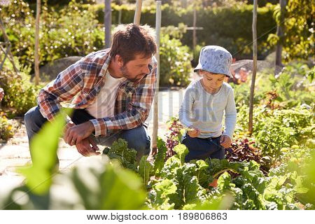 Son Helping Father As They Work On Allotment Together