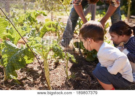 Father And Children Looking At Crops Growing On Allotment