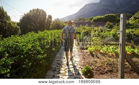 Rear View Of Mature Man Working On Community Allotment
