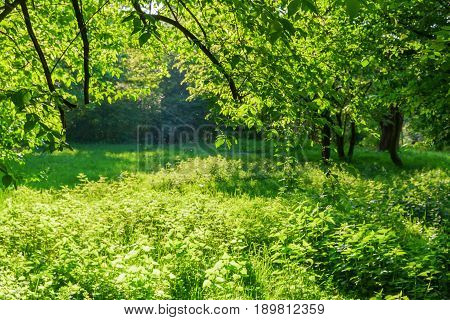 Meadow With Stinging Nettle Plants