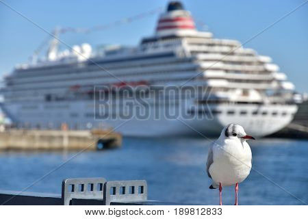 A sight of a port ship and seabird