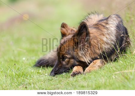 Patient Dog Waits On The Grass Looking Bored