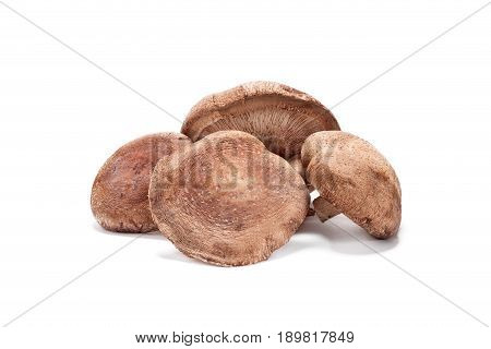 fresh Shiitake mushroom on white background isolated