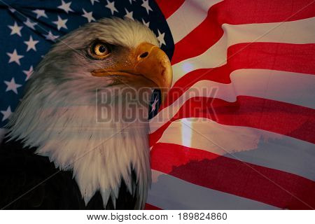 American flag with american eagle and sunlight. American nationaly symbol.