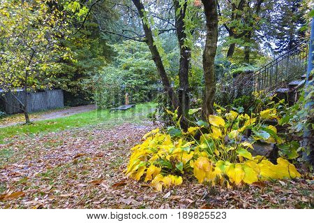 Autumn Impression From The Saxony Forest, Near Hamburg. Germany