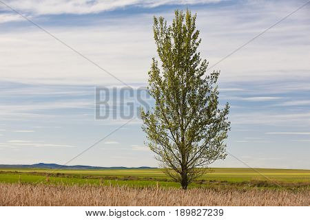 Green landscape with tree and sky. Gallocanta lagoon. Teruel Spain. Nature
