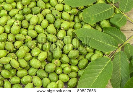 A lot green young walnuts in husks with walnut leaves on wooden table