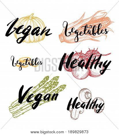 Healthy vegan food vintage labels set vector illustration. Vegetarian product lettering, fresh and natural vegetables stickers. Asparagus, pumpkin, tomato, mushrooms, beans hand drawn sketches.