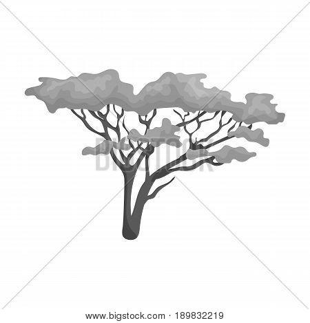 Tree in the savannah.African safari single icon in monochrome style vector symbol stock illustration .