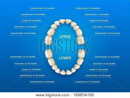 Children mouth with tooth numbering chart on blue background