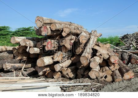 Stack of teak wood log on blue sky