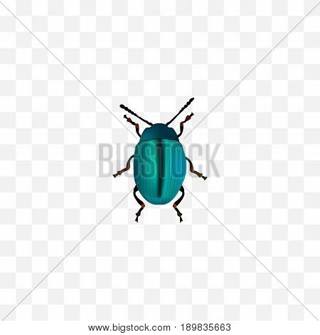 Realistic Insect Element. Vector Illustration Of Realistic Bug Isolated On Clean Background. Can Be Used As Bug, Blue And Dor Symbols.