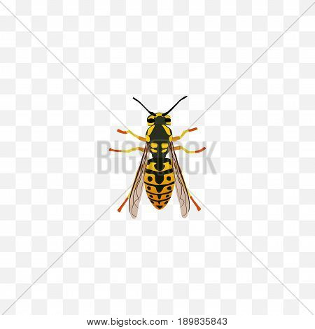Realistic Sting Element. Vector Illustration Of Realistic Bee Isolated On Clean Background. Can Be Used As Bee, Wisp And Sting Symbols.