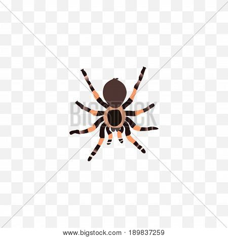 Realistic Black Widow Element. Vector Illustration Of Realistic Tarantula Isolated On Clean Background. Can Be Used As Tarantula, Spider And Arachnid Symbols.