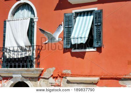 White bird seagull flying in Burano Venice Italy