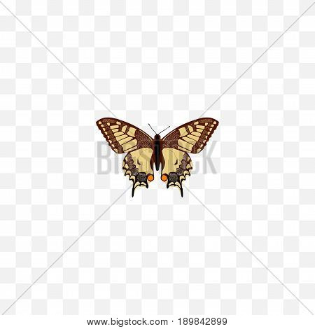 Realistic Checkerspot Element. Vector Illustration Of Realistic Tiger Swallowtail Isolated On Clean Background. Can Be Used As Tiger, Swallowtail And Butterfly Symbols.