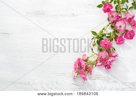 Branch of  small pink roses on a  shabby wooden table. flat lay