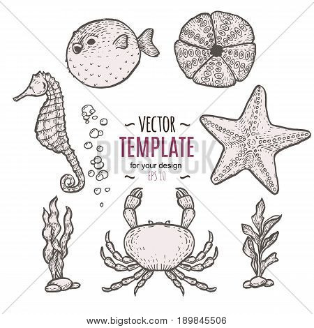 Hand drawn outline sea life illustration. Sketch template
