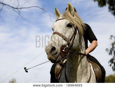 ein Mann fährt auf Thr Arabische Pferde