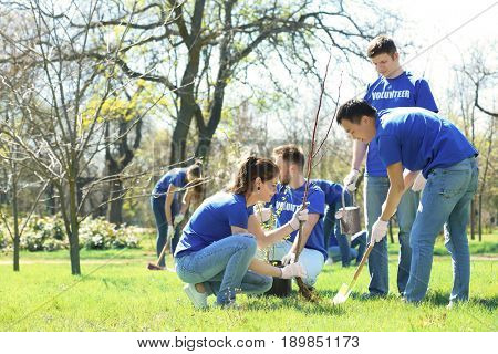 Group of volunteers working in park