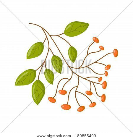 Vector Cartoon Isolated Ayurveda Herb