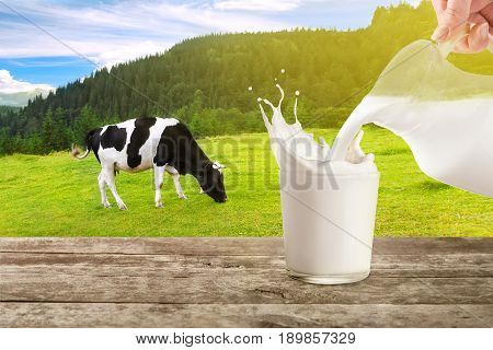 milk from jug pouring into glass with splashes on table with cow on the meadow in the background. Glass of milk. Pouring milk. Splashes of milk from the glass