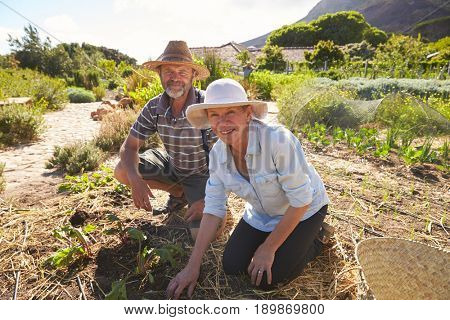 Portrait Of Mature Couple Working On Community Allotment