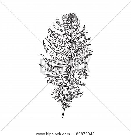 Hand drawn smoth black and white dove bird feather, sketch style vector illustration on white background. Realistic hand drawing of grey bird feather