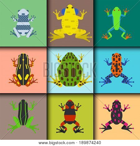 Frog cartoon tropical animal cards cartoon nature icon funny and isolated mascot character wild funny forest toad amphibian vector illustration. Graphic ecosystem croaking hop drawin