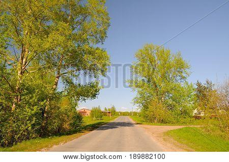 Rural asphalt road with poplars. Evening Lighting.