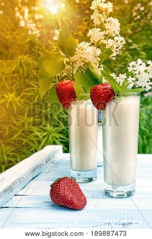 Milk smoothie with strawberries and banana on a background of green plants in sunset in the sun.