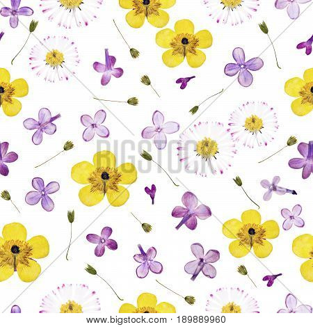 Pressed summer spring violet yellow flowers isolated on white background pattern. For use in scrapbooking floristry or herbarium.