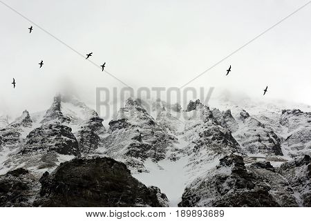 Birds Flying past Arctic Mountains Covered in Mist. Spitsbergen Svalbard Norway