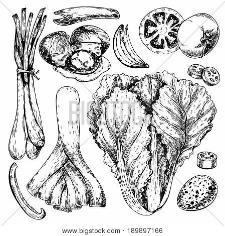 Vector hand drawn set of farm vegetables. Isolated chinese cabbage leek quail egg tomato onion. Engraved art. Organic sketched objects.Use for restaurant menu grocery market store party meal
