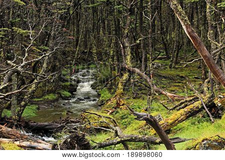 Wild river in an overgrown forest, Tierra Del Fuego, Patagonia, Chile