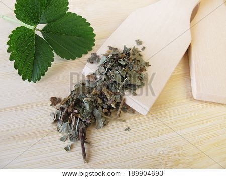 Wild strawberry leaves, Fragariae folium, for herbal medicine