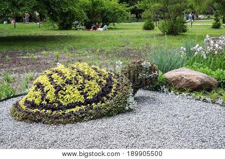 Turtle shaped bush in a topiary garden. Ornamental park garden design