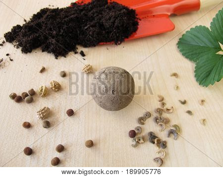 Seed ball or seed bom with flower seeds