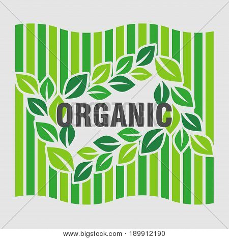 logo ecology green leaves design of Ecology organically pure product flat design vector image