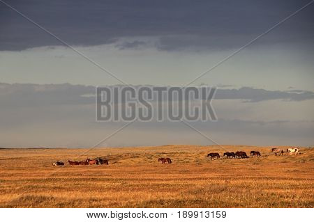 Wild horses, near Porvenir, Tierra Del Fuego, Patagonia Chile