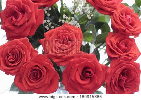 Bouquet of pretty red roses with babys breath and green leaves seen from above. White background behind beautiful red roses with babys breath and green leaves.