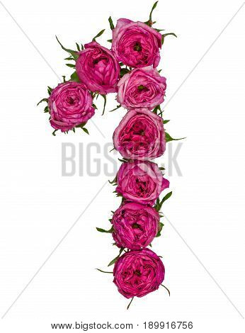 Arabic Numeral 1, One, From Red Flowers Of Rose, Isolated On White Background
