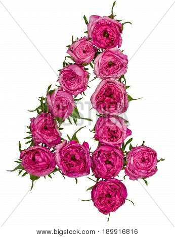 Arabic Numeral 4, Four, From Red Flowers Of Rose, Isolated On White Background