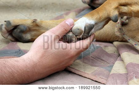 Yellow Dog Paw And Human Hand , Friendship Concept