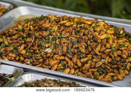 Edible roasted and spiced meal worms Bugs fried on street food in Thailand Fried silk worm is the food in Thailand.