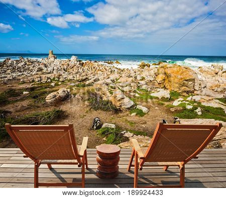 Two armchairs chaise longue by Atlantic ocean. Boulders Penguin Colony in the Table Mountain National Park, South Africa. African penguins among coastal stones. The concept of ecotourism