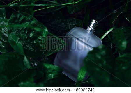 stylish male bottle of perfume over green