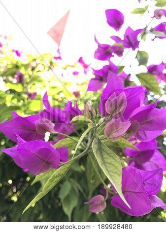Flores moradas que nos llevan a desviar la mirada