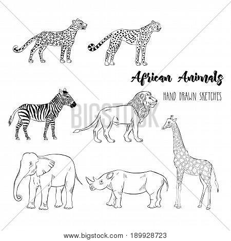 African animals set. Hand drawn sketches. Vector Illustration