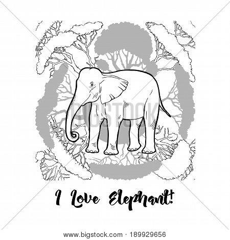 Elephant and savanna trees print. Hand drawn sketches. Vector Illustration